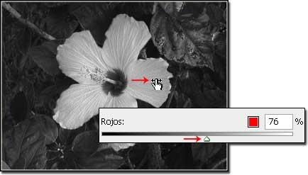 cayena5.jpg