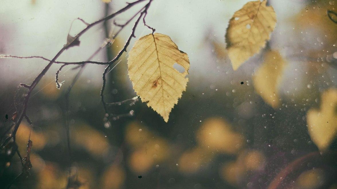 slider-leaf