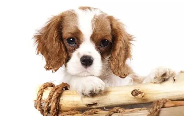 您家的寵物被皮膚病折磨多少了?LineID:@353vmoiy – 網路行銷新鮮事