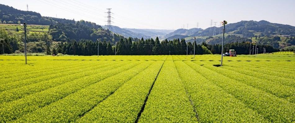 Maruyama Fields Shizuoka