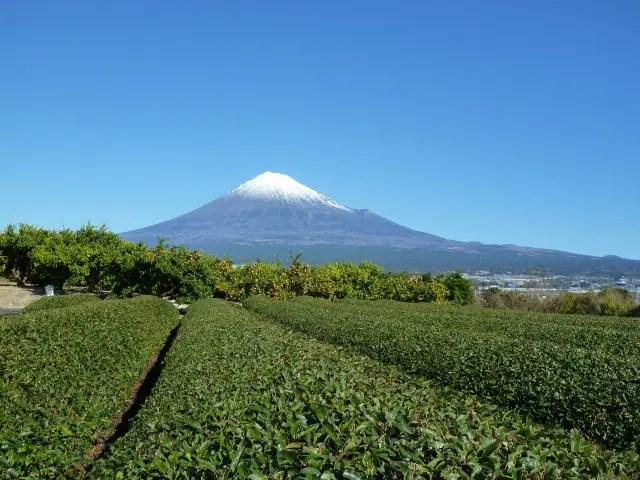 富士山と茶畑(静岡県)