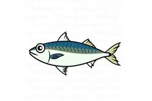 サバやイワシなどの青魚はDHAやEPAが豊富