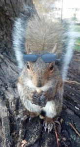 Sunglasses-Squirrel