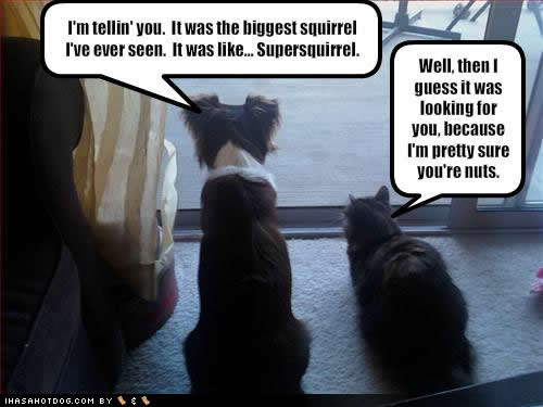 cat dog squirrel nuts joke
