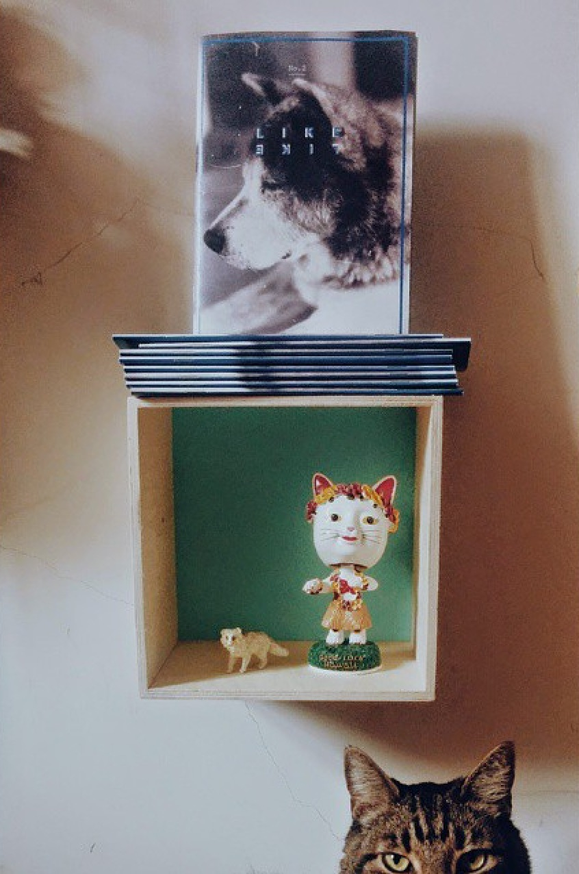 LikeLike Zine, modern, still life, cat