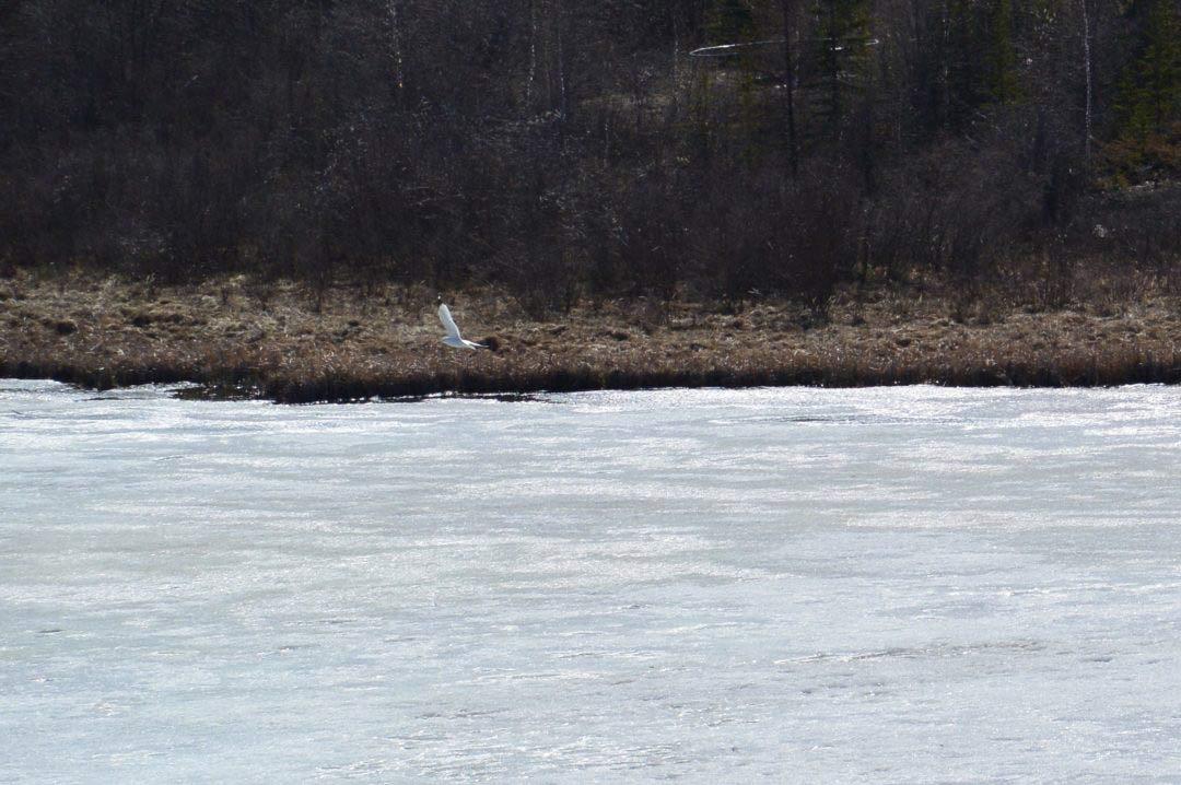 Bird, lake, goals, go beyond