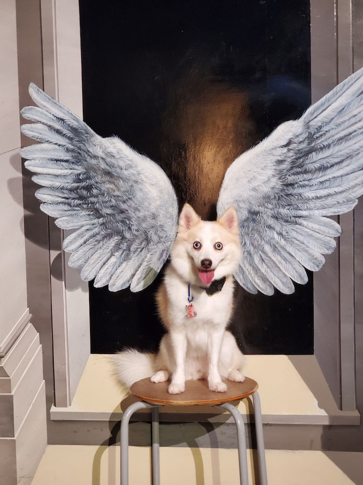 weekend in tochigi pomsky dog at trick art museum wings