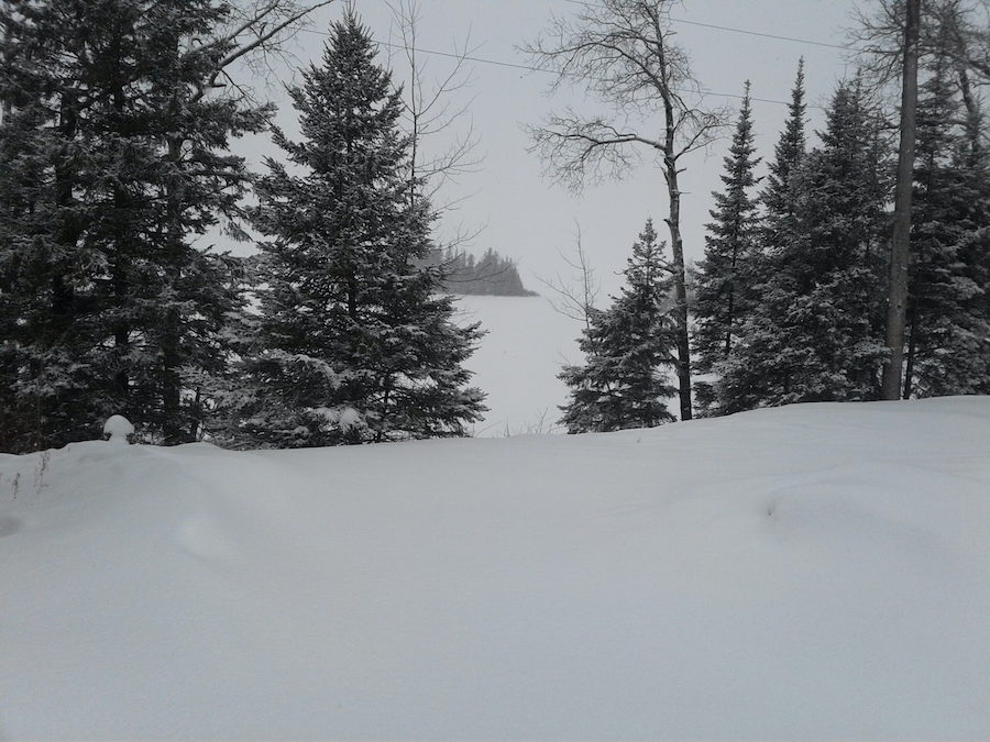 Snowy plot with trees