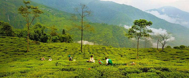 Darjeeling: Mountains, colonial history and fine tea