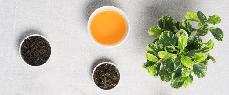 A Brief History of the Oolong Tea