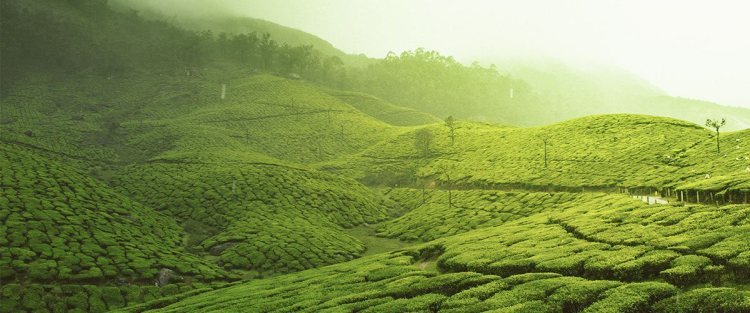 Munnar – A Community-run Tea Industry