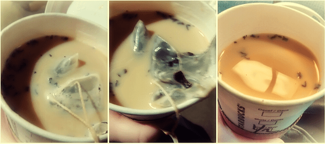 Starbucks Tea Latte Broken Tea Bag