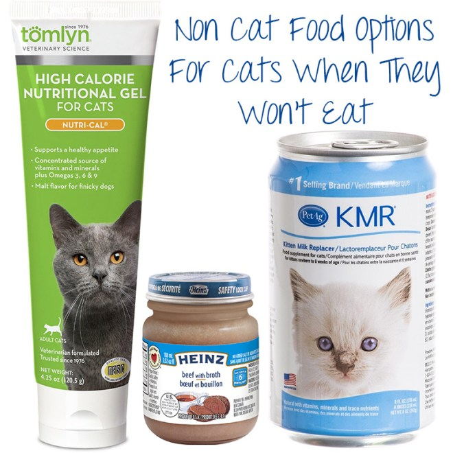 Low Fat High Protein Wet Cat Food