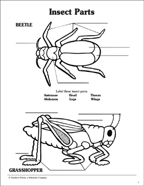 grasshopper insect diagram wiring diagrams for light switches parts labeling activity page printable skills sheets