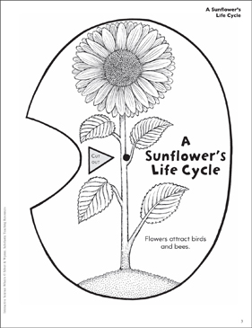 A Sunflower's Life Cycle: Interactive Science Wheel