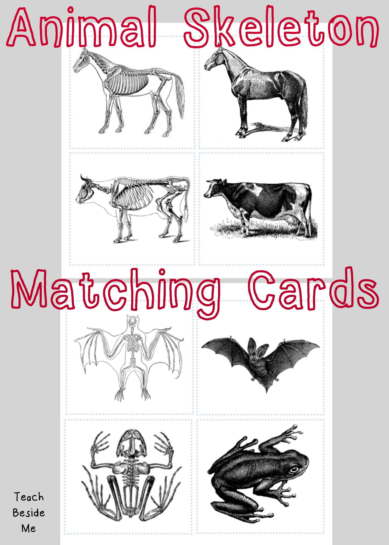 Animal Skeleton Matching Cards