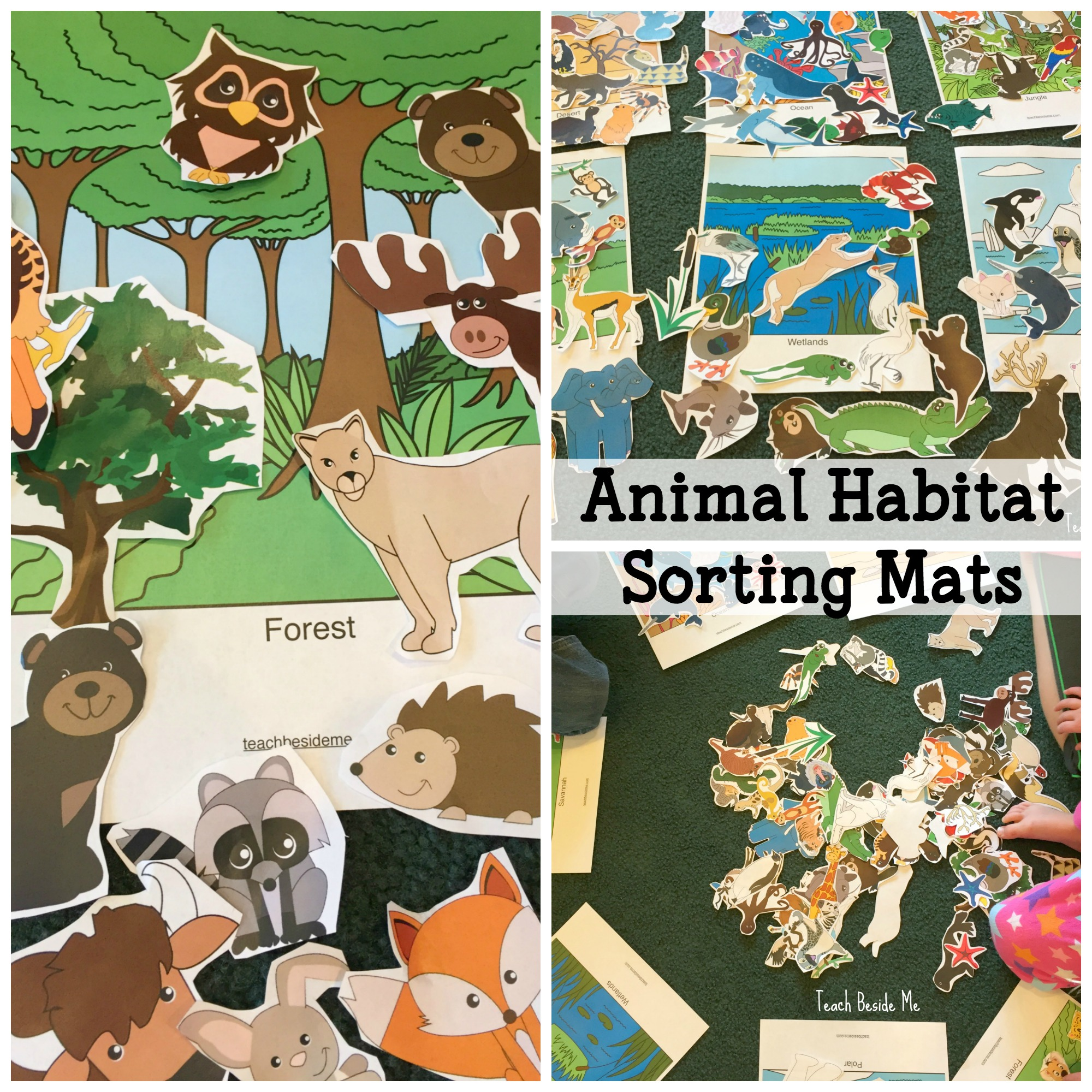 Worksheet For Teaching Habitats