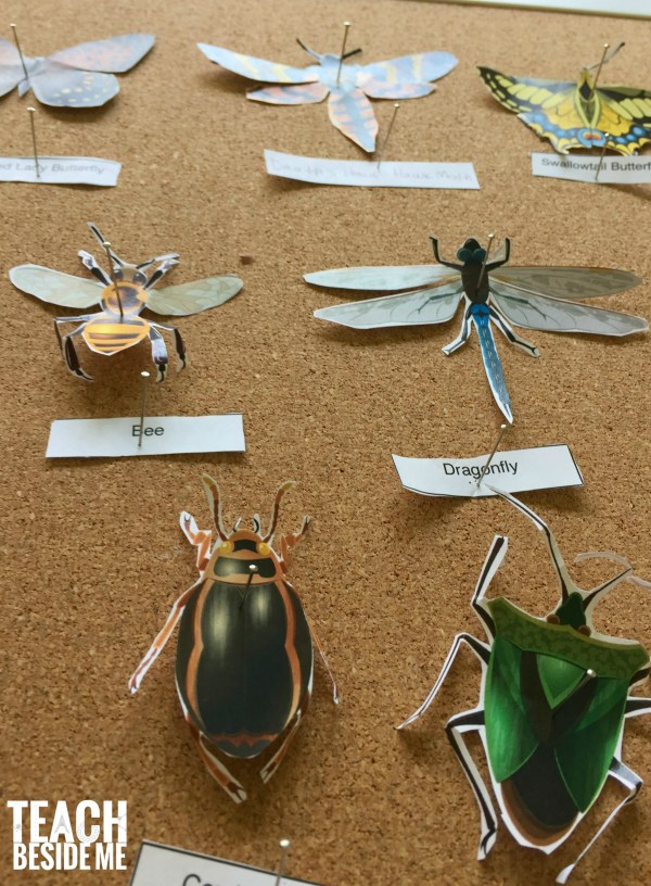 Printable Paper Insect Display - Teach