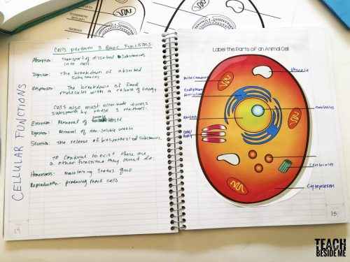 small resolution of cell diagrams interactive note taking