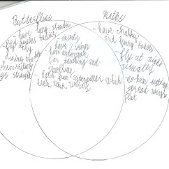 Venn Diagram Answers About Animals Wiring For Sony Xplod 52wx4 2nd Quarter Sy 2016 2017 Teacherbucay