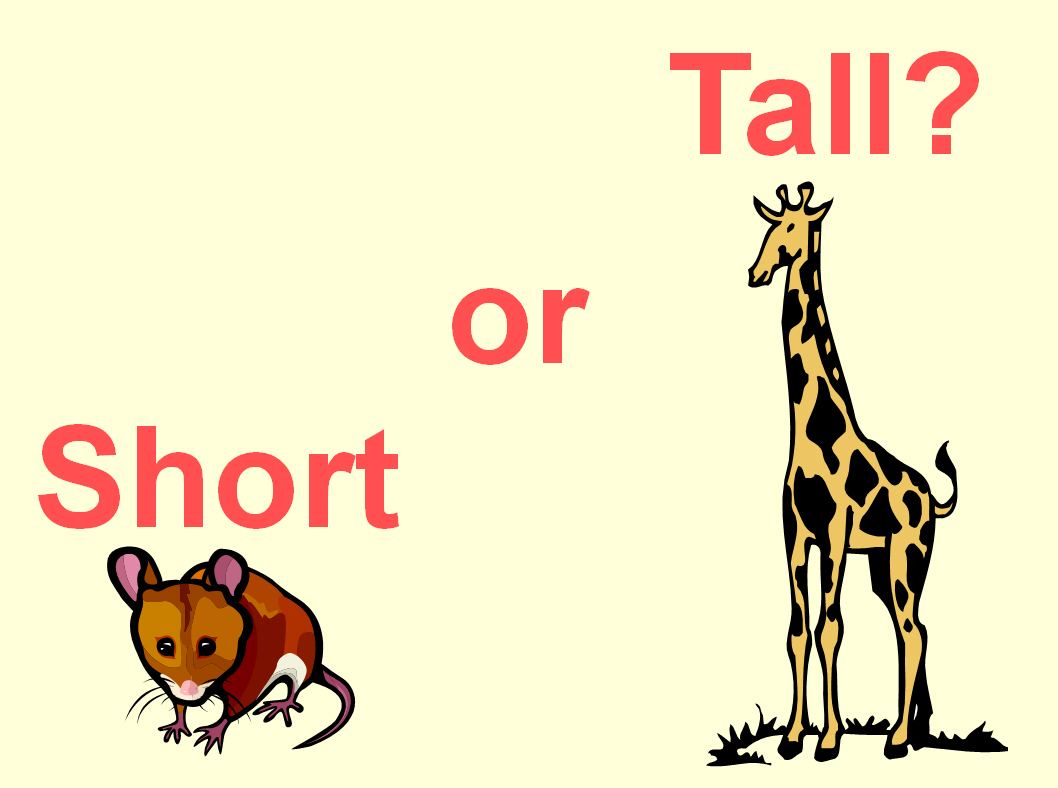 Math Lesson Tall Or Short