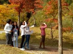 Birds of Korea