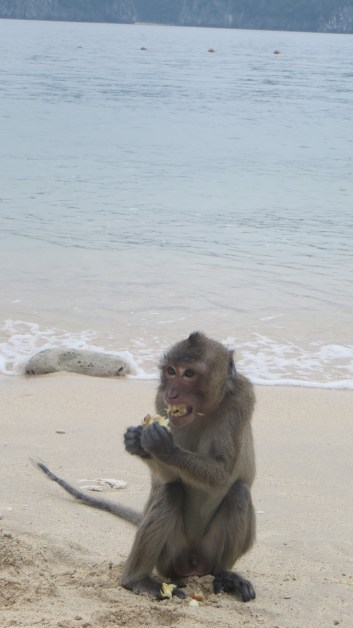 Monkey eating some fruit from the trees