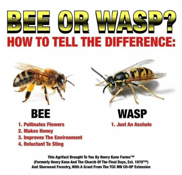 Bee vs Wasp