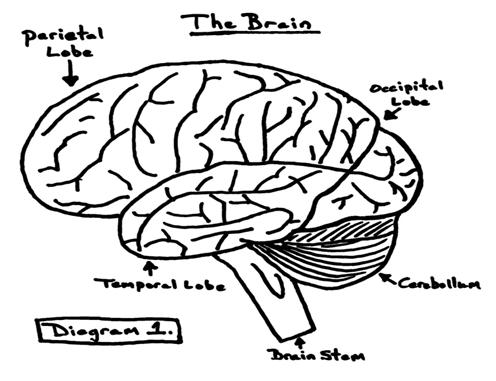 Neuroanatomy: Neuroanatomy Worksheet
