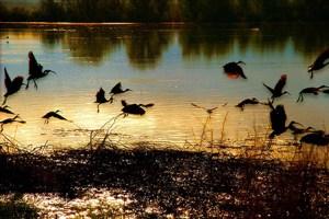 B-public domain-Birds_flying_SMALL