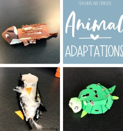 Animal Adaptations Resources Round-Up - Teachers are Terrific [ 960 x 960 Pixel ]