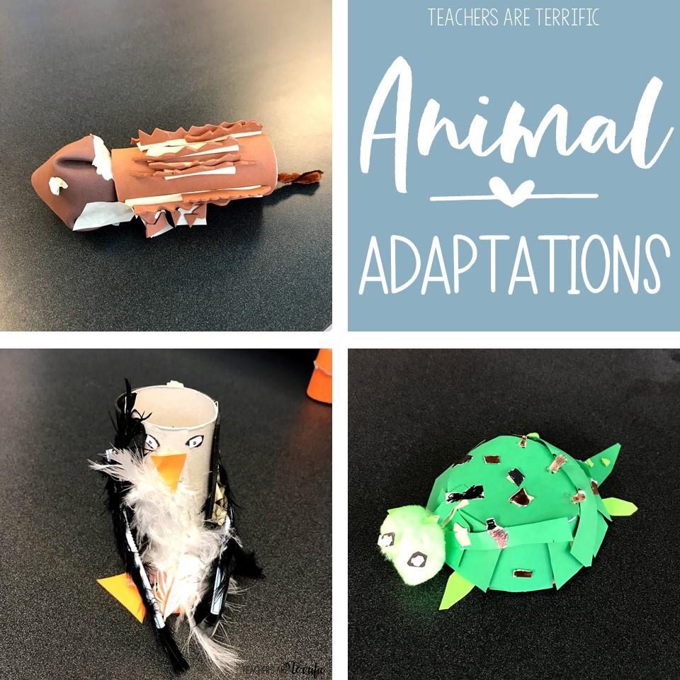 medium resolution of Animal Adaptations Resources Round-Up - Teachers are Terrific
