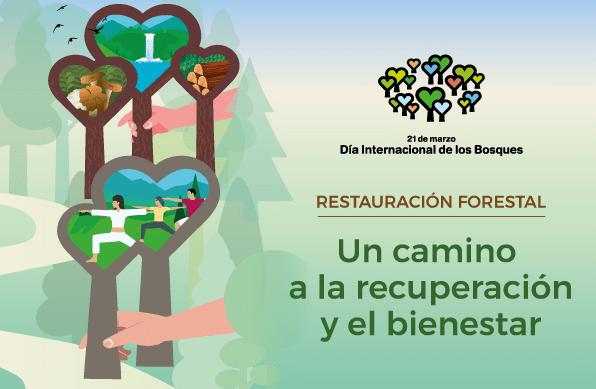 Día de los bosques 2021 : restauración forestal.