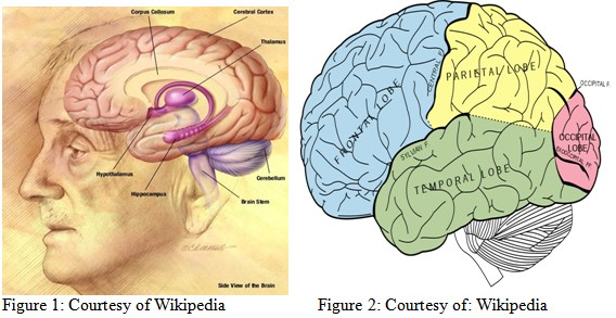 left side brain functions diagram wiring alternator 09 04 05 buzz effects of caffeine nicotine alcohol and the human form function
