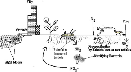 Nutrient Cycle Worksheet Integrated Science Name Cycles