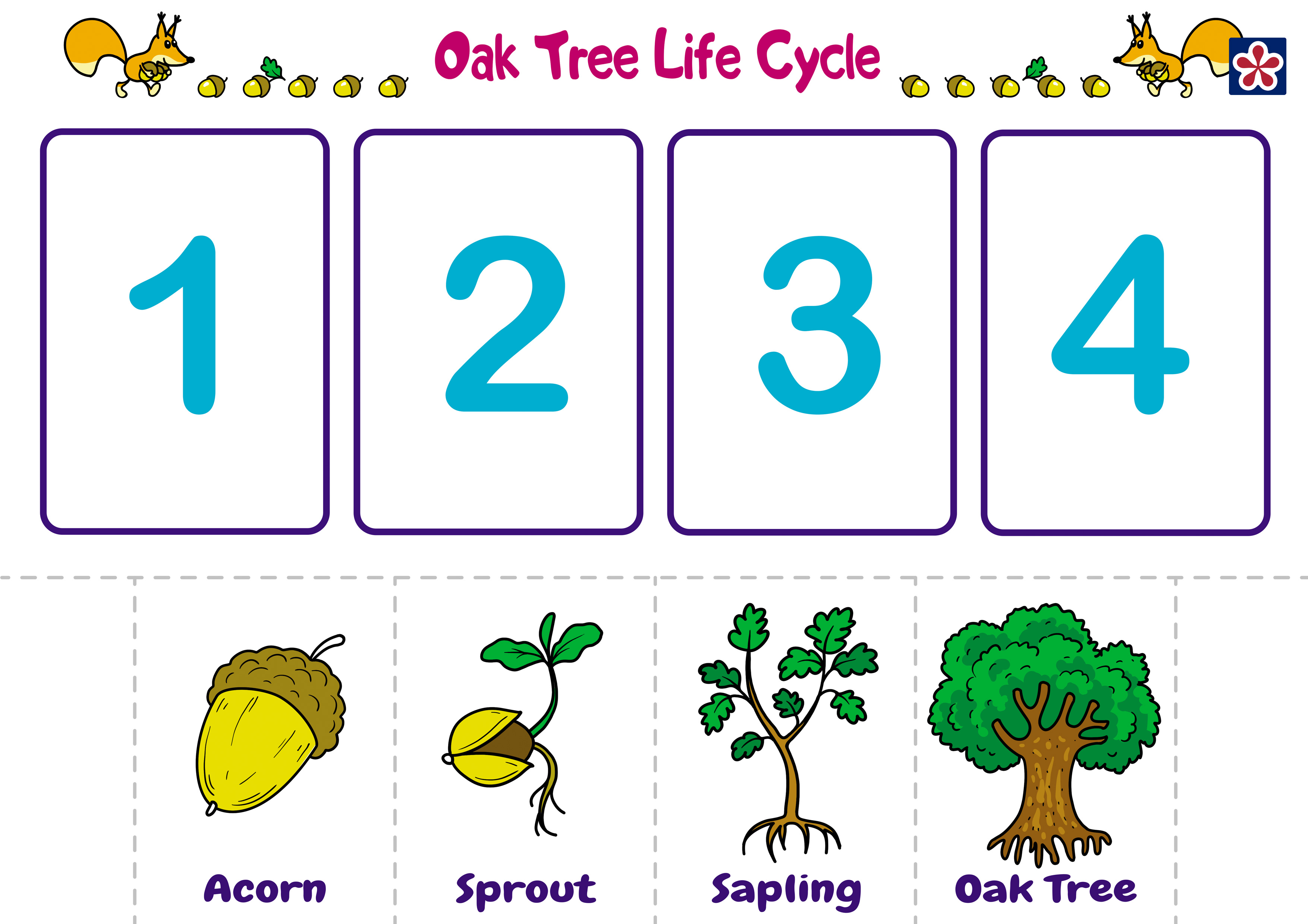 Count 6 Acorns Worksheets