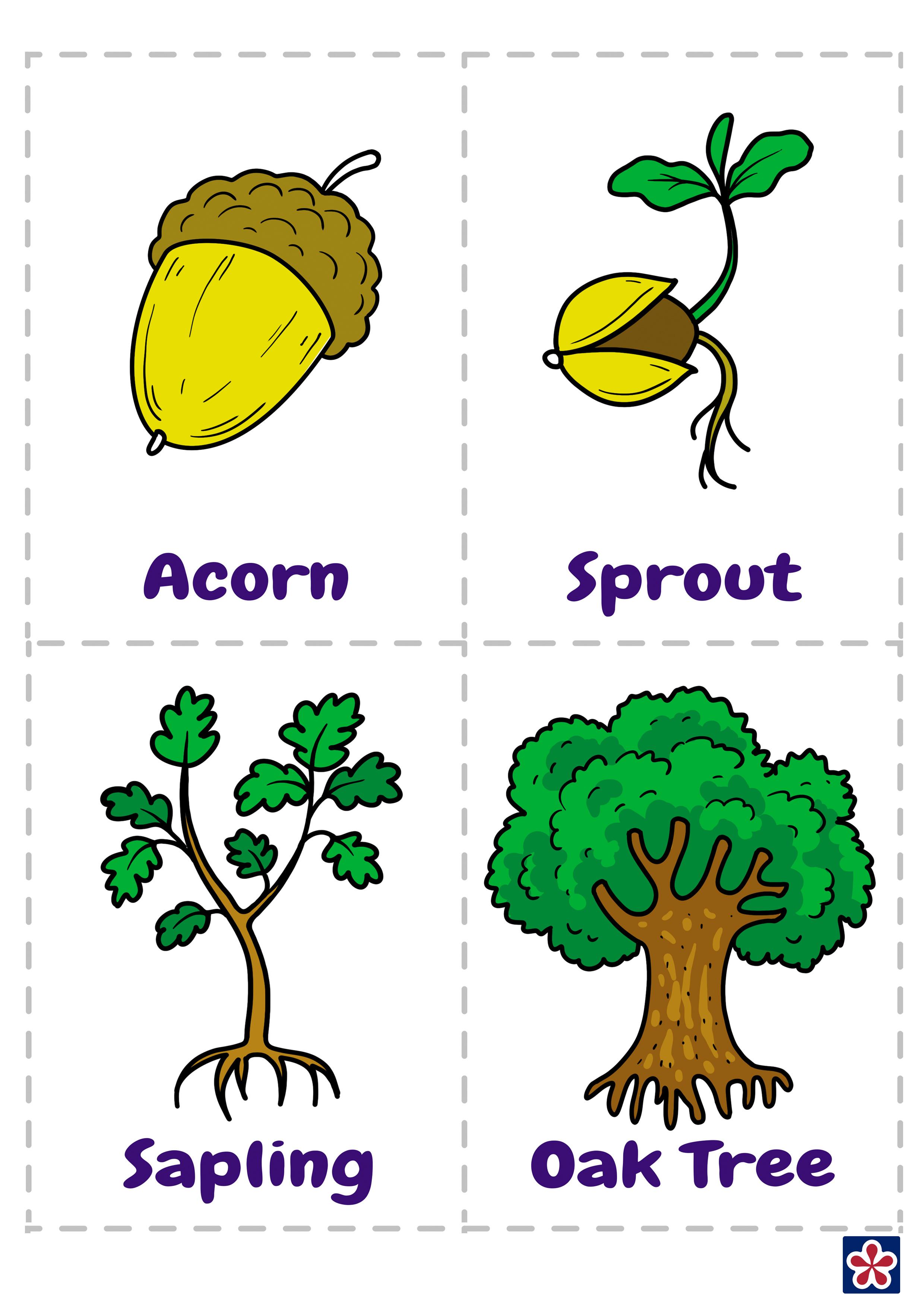 From Acorn To Oak Tree Free Printables Teachersmag