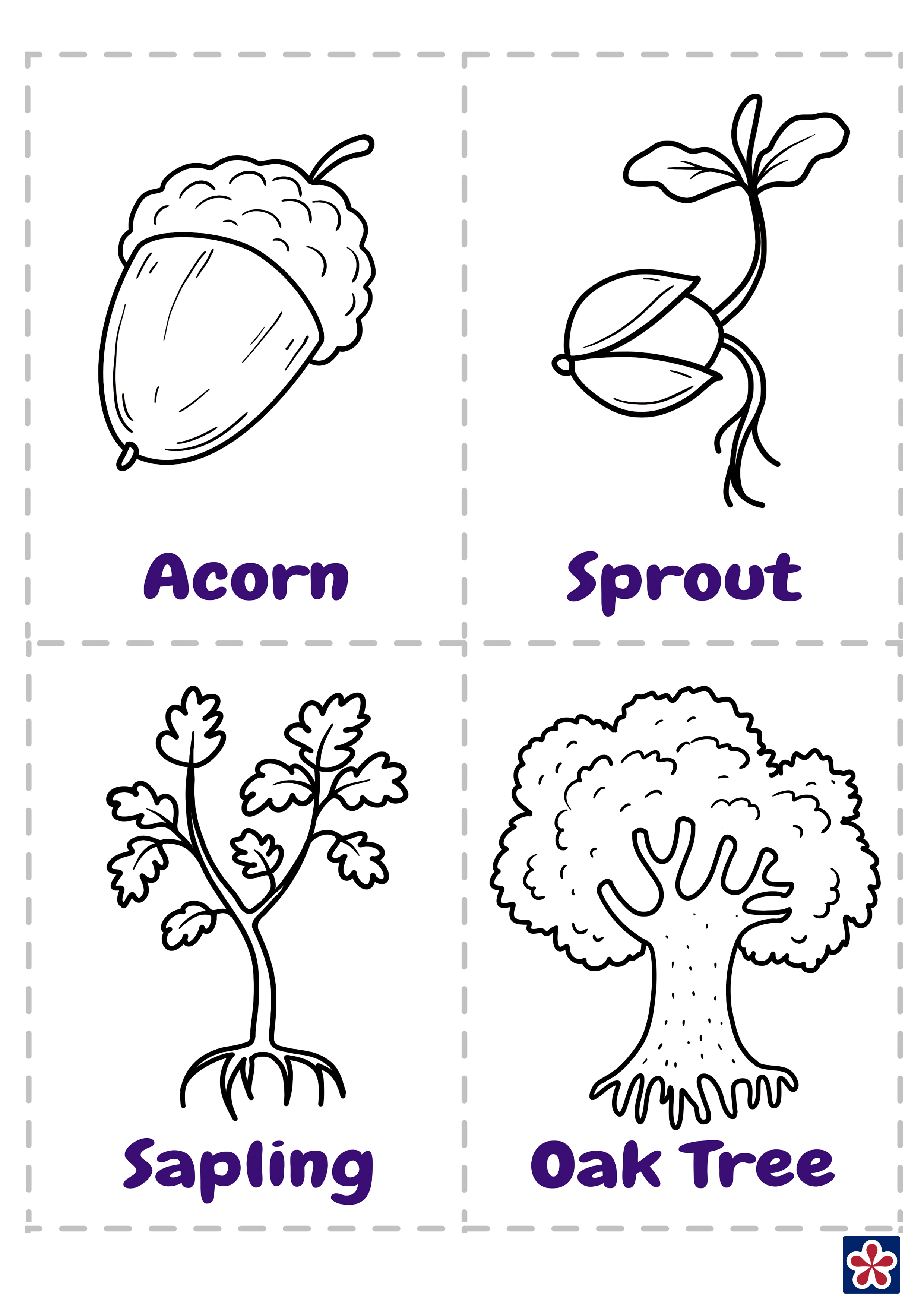 From Acorn To Oak Tree Free Printables Teachersmag