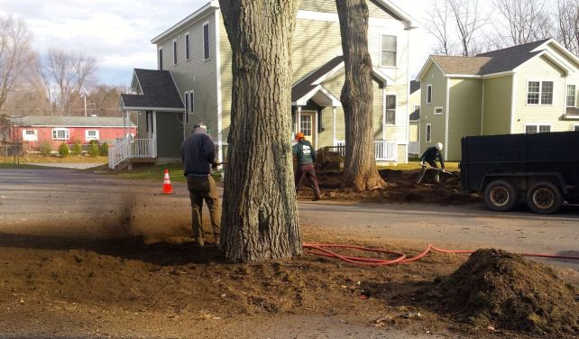 An air spade can be used to break up compacted soil around a tree's roots.