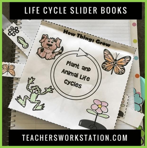 life cycles slider book