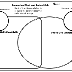 Plant Cell Animal Venn Diagram Woody Stem Observing Cells Teacher S Workstation Comparing And