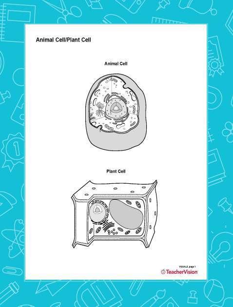 Animal Cell Unlabeled : animal, unlabeled, Animal, Cell/Plant, (Blank), Printable, Grade), TeacherVision