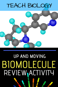 Biomolecule Review Activity