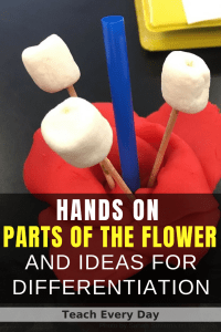 parts of the flower model