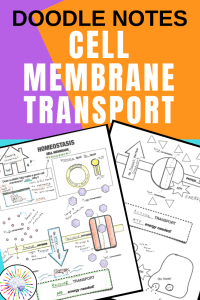 Cell Membrane Transport Doodle Notes