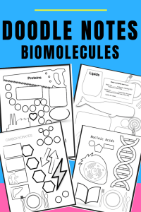 Biomolecules Doodle Notes for Biology