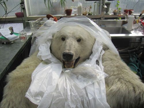 polar bear diagram 1999 gmc sonoma radio wiring november   2012 teach green in brooklyn
