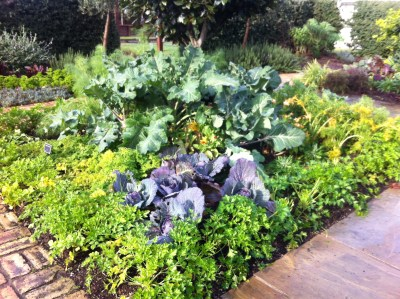 Rethinking the Traditional Schoolyard – Edible Gardens