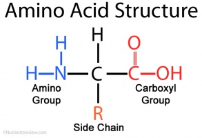 Amino acids  The School of Biomedical Sciences Wiki