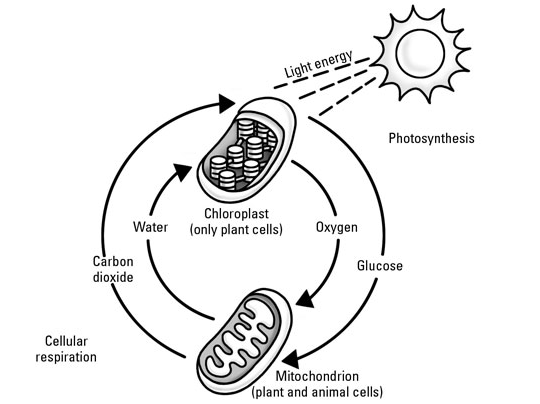 Photosynthesis Process Guys!